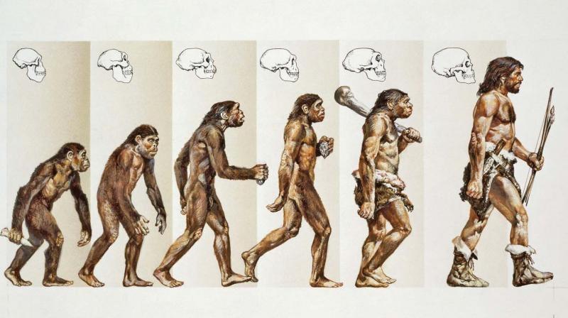 Quá trình từ vượn tiến hóa thành người theo học thuyết Darwin. (Ảnh qua amazonaws.com)
