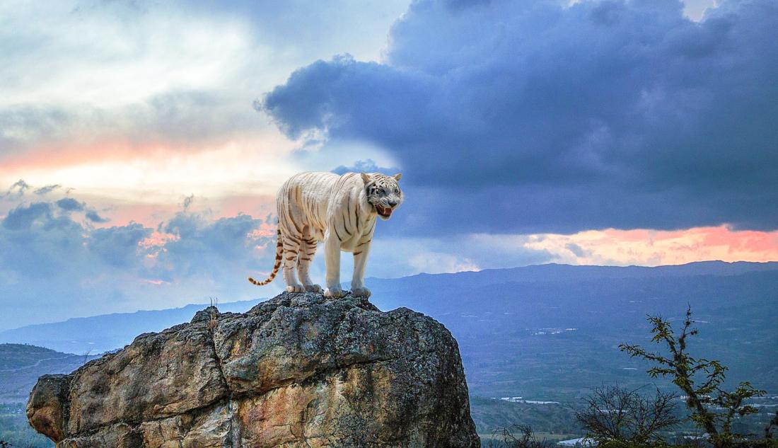 Báo ứng đến tức thì: Giết người giá họa cho hổ, bị hổ ăn thịt