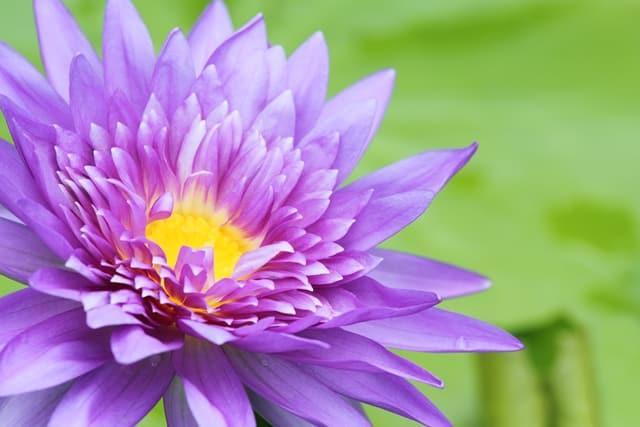 Khi lòng tốt được người truyền người, tâm truyền tâm...