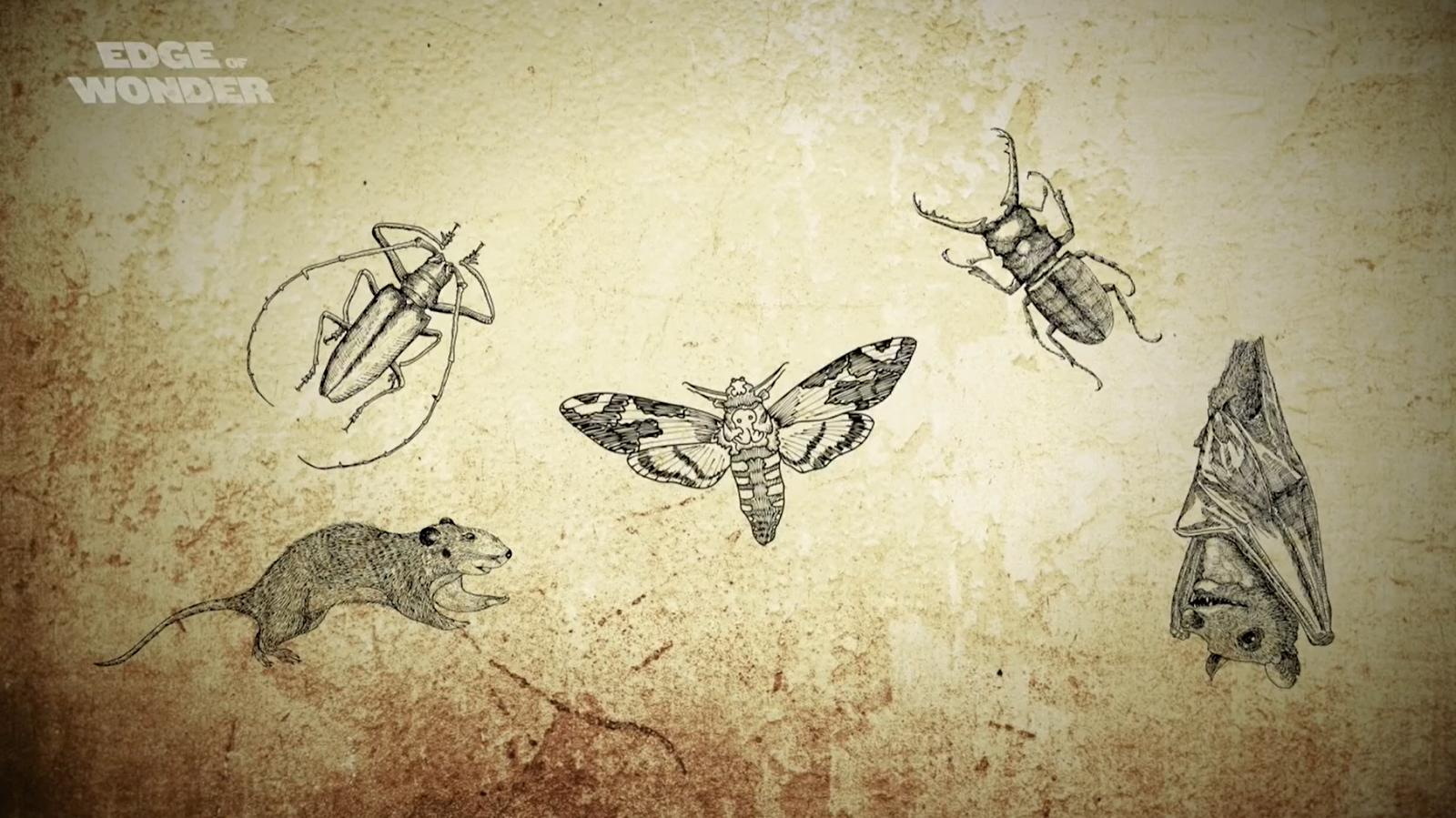 """Những người thờ quỷ Satan tin rằng, các loại côn trùng có thể bị ma quỷ nhập vào và được sử dụng làm """"bùa chú"""""""
